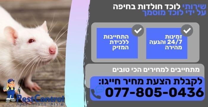 לוכד חולדות בחיפה