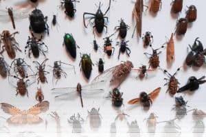הדברת חרקים