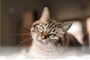 הרחקת חתולים