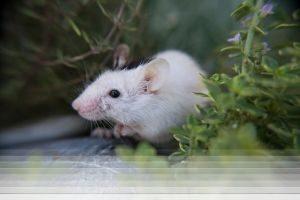 לוכד עכברים בבאר שבע